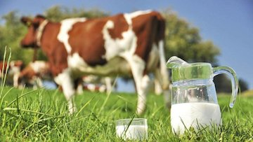 ابهام قیمت شیر در قطب تولید محصولات دامی کشور