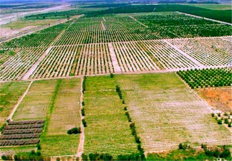 افزایش ۸۲ درصدی اعتبار طرح حمایت از ارتقای ضریب خوداتکایی محصولات راهبردی کشاورزی در بودجه ۱۴۰۰
