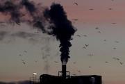 نگرانی سازمان ملل از شتاب بشر برای نابودی کره زمین