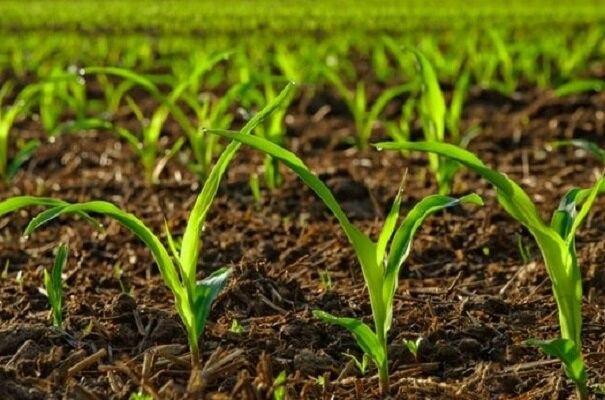 تبدیل زمین های بایر به کشاورزی با مهندسی ژنتیک گیاهان
