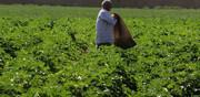 32.5 درصد اشتغال کشور در بخش کشاورزی است/ هنوز کشاورزی را صنعت نمیبینیم