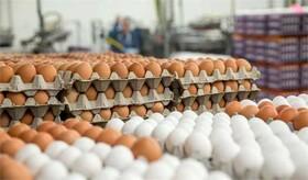 به افزایش قاچاق و تخلف دامن نزنیم/ تولید محصولات پروتئینی کار پیچیدهای نیست؛ بپذیریم مشکل از سوء مدیریت است