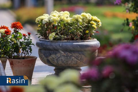 جشنواره گلهای داوودی درباغ گلها  عکس: مجتبی جهان بخش